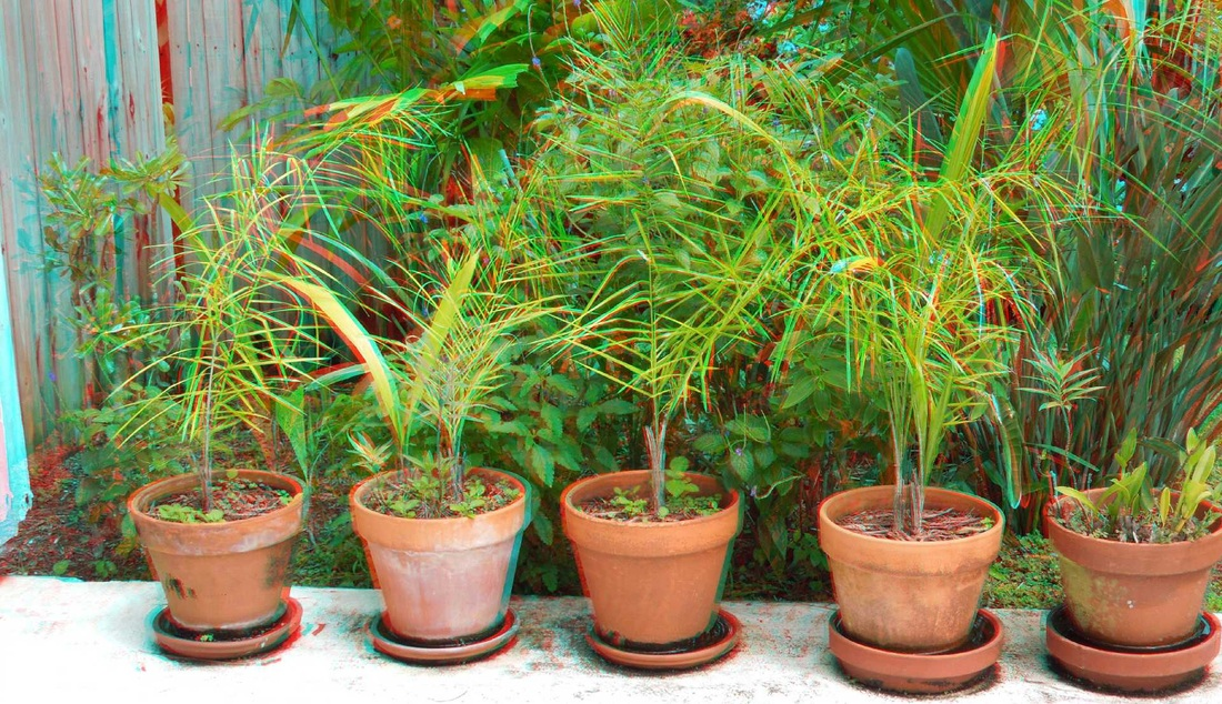 3D Anaglyph Palm Grasses