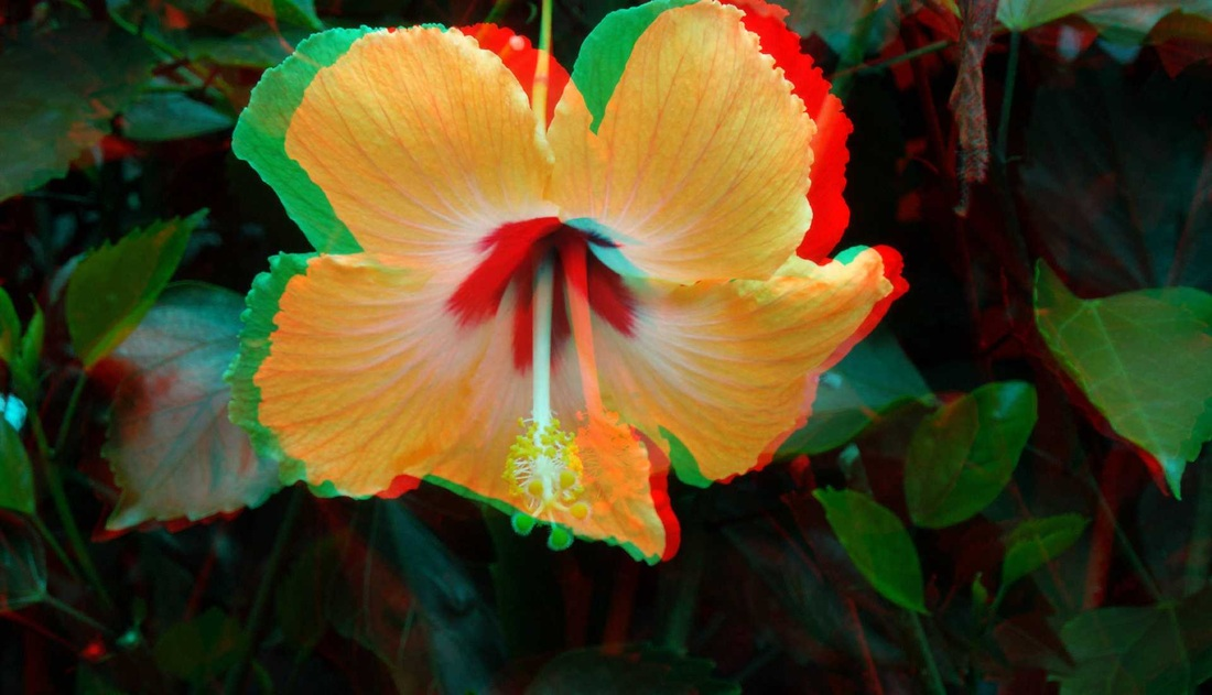 3D Anaglyph Hibiscus