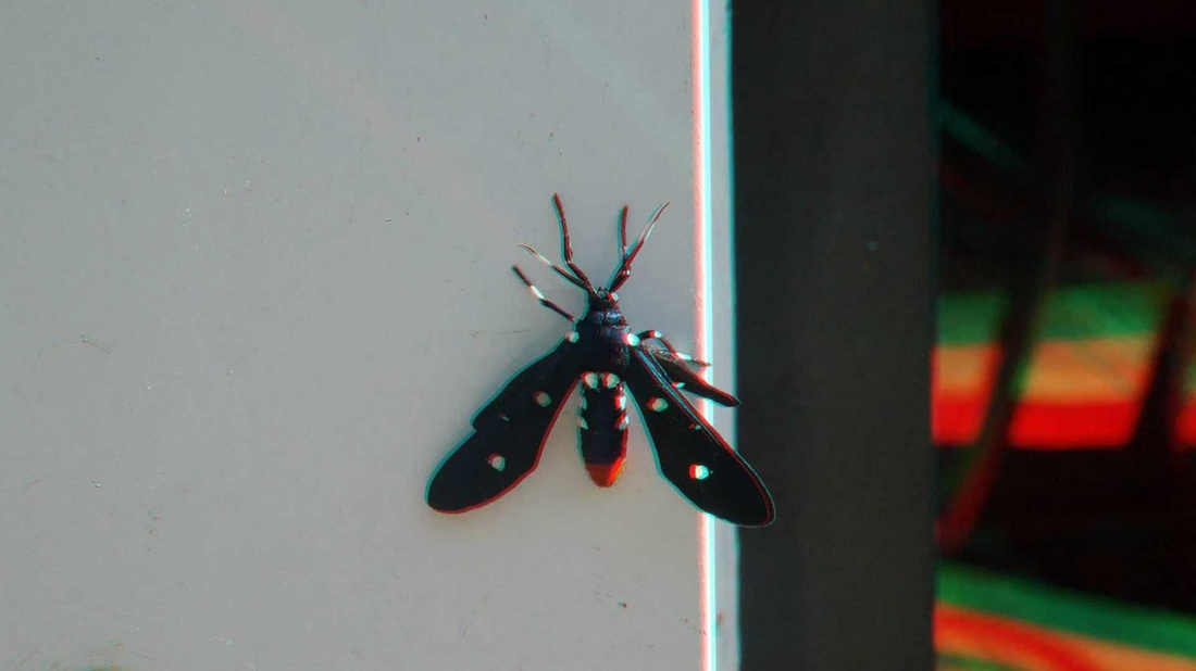 3 d Anaglyph Polka Dotted Moth