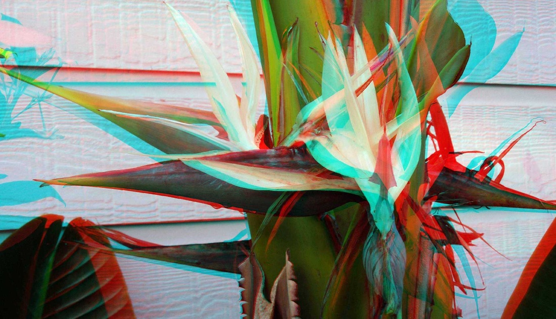 3d anaglyph white bird of paradise