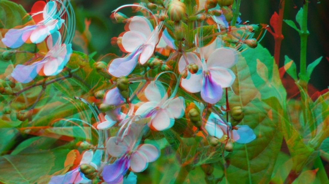 3D Anaglyph Blue Butterfly Bush