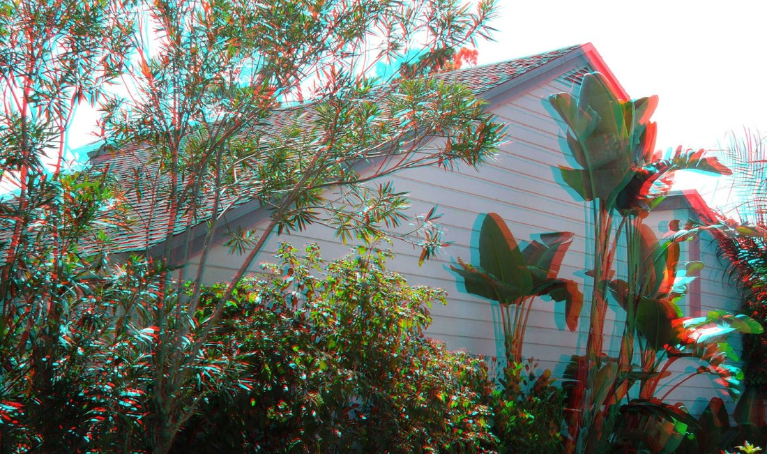 3D Anaglyph - more trees