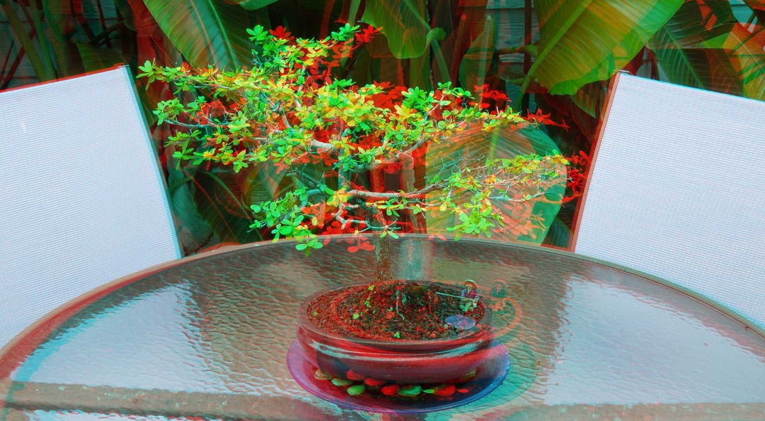 3D Anagluph Bonzai plant