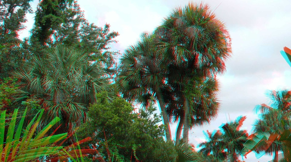 3D Anaglyph trees on the street